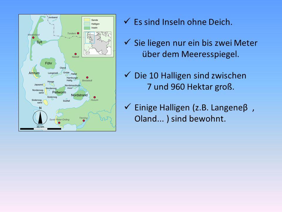 Es sind Inseln ohne Deich. Sie liegen nur ein bis zwei Meter über dem Meeresspiegel. Die 10 Halligen sind zwischen 7 und 960 Hektar groß. Einige Halli