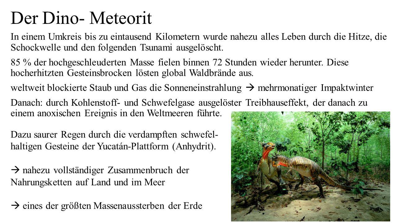 Der Dino- Meteorit In einem Umkreis bis zu eintausend Kilometern wurde nahezu alles Leben durch die Hitze, die Schockwelle und den folgenden Tsunami ausgelöscht.