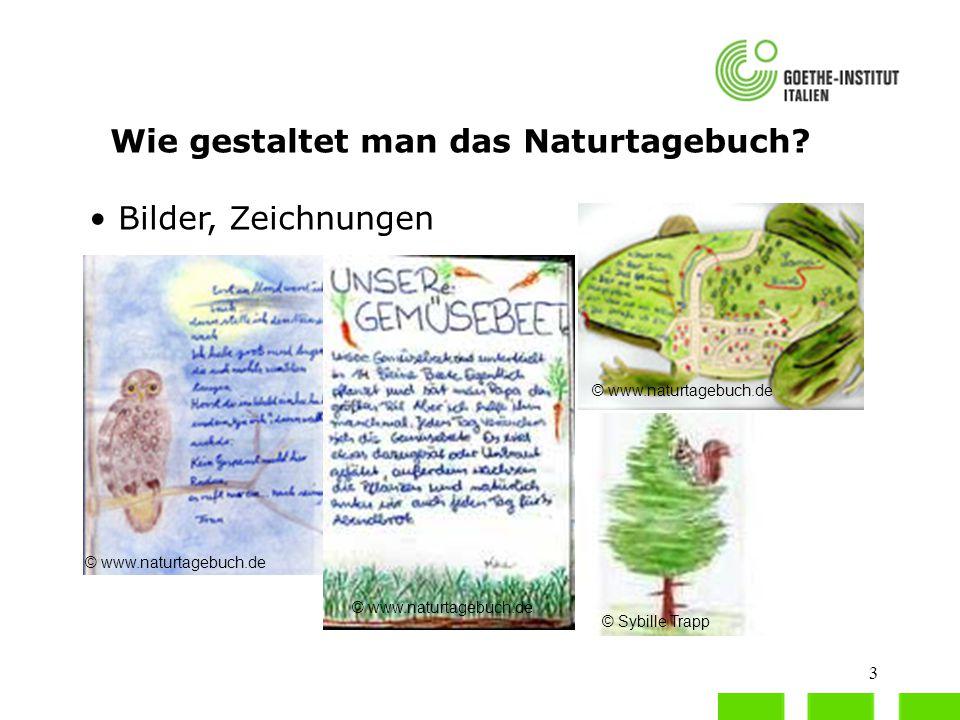 3 Wie gestaltet man das Naturtagebuch? Bilder, Zeichnungen © www.naturtagebuch.de © Sybille Trapp