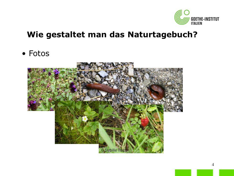 5 Wie gestaltet man das Naturtagebuch? Blätter oder gepresste Blumen © Sybille Trapp