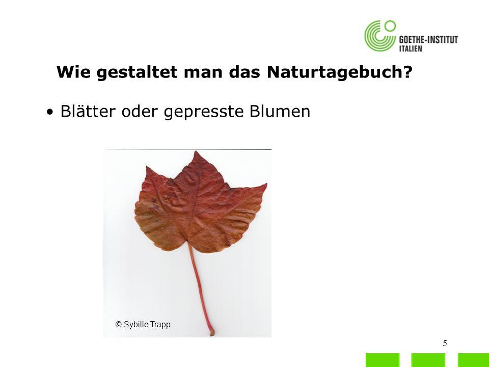 6 Wie gestaltet man das Naturtagebuch.