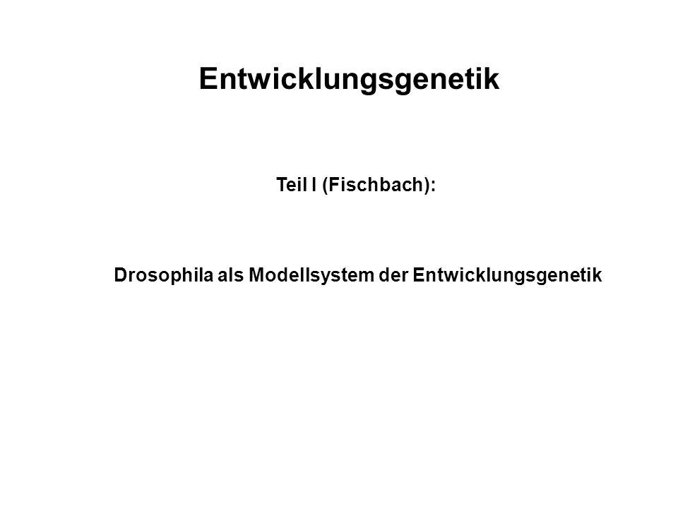 Molekularbiologie und Genetik: Entwicklungsgenetik Fischbach, Laux, Baumeister