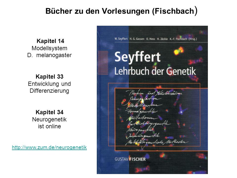 Webadressen zu den Vorlesungen (Fischbach) Developmental Biology (Gilbert) http://zygote.swarthmore.edu Fischbach Labor http://filab.biologie.uni-frei