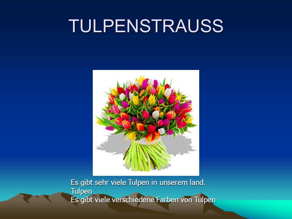 TULPENSTRAUSS Es gibt sehr viele Tulpen in unserem land.