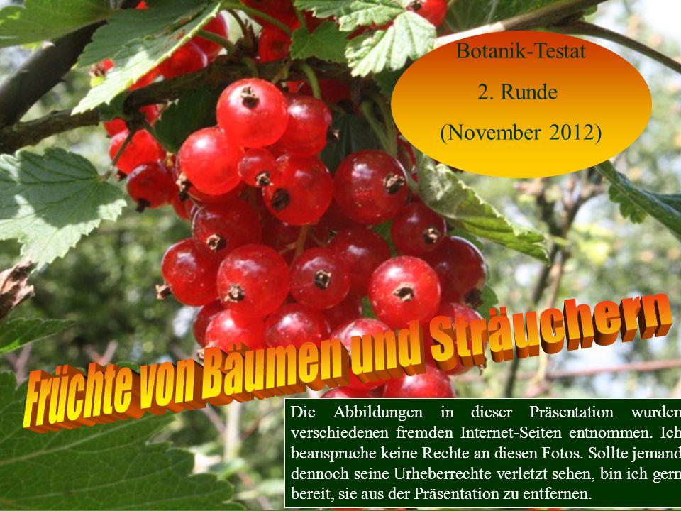 Jetzt ohne Laub!!! Längliche rote Früchte! Berberitze (Berberis vulgaris)