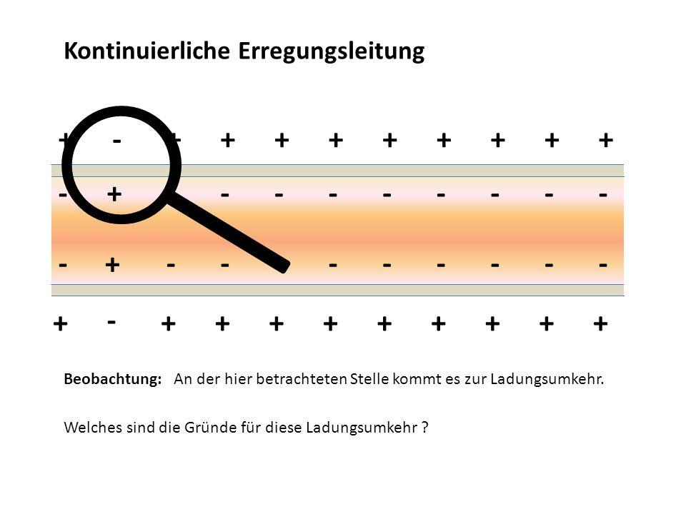 Kontinuierliche Erregungsleitung + + +++++++++ + + +++++++++ - - --------- - - --------- Beobachtung: An der hier betrachteten Stelle kommt es zur Lad