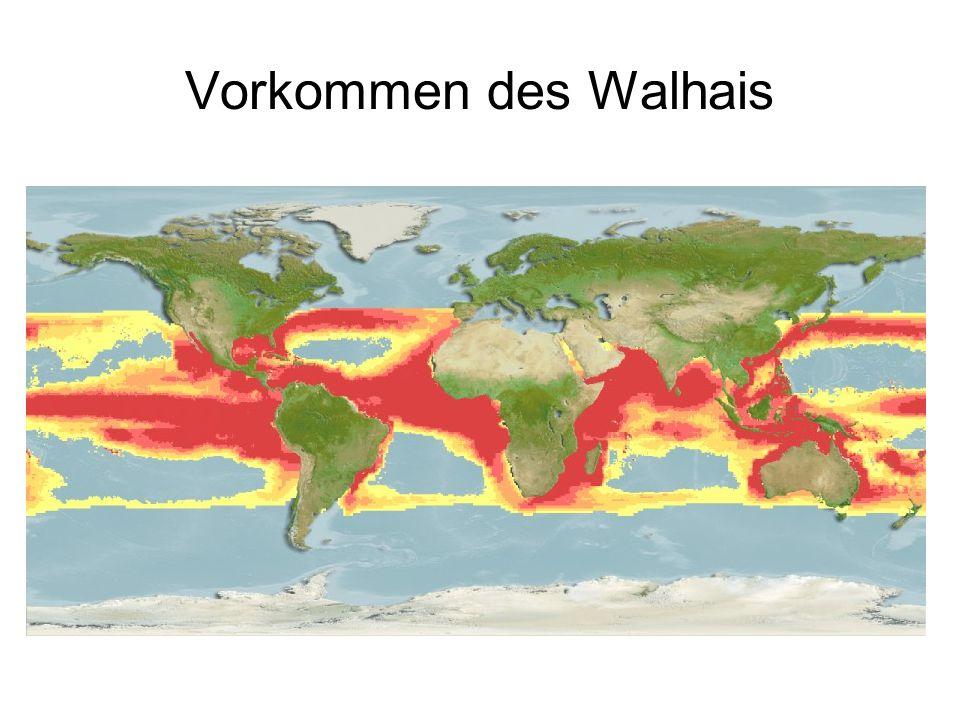 Vorkommen des Walhais