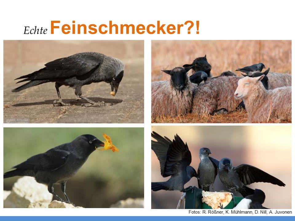 Fotos: R. Rößner, K. Mühlmann, D. Nill, A. Juvonen Echte Feinschmecker?!