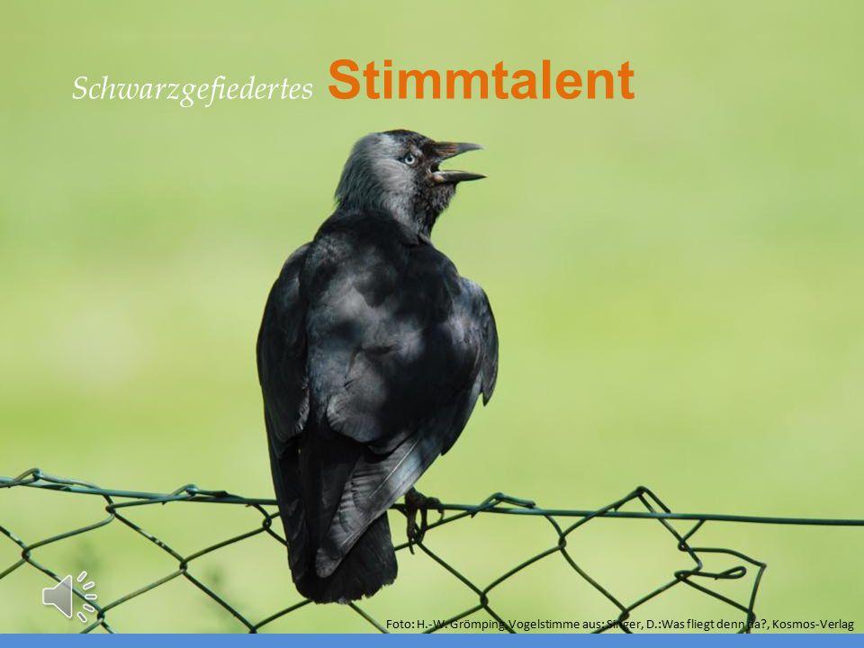 Schwarzgefiedertes Stimmtalent Foto: H.-W. Grömping,Vogelstimme aus: Singer, D.:Was fliegt denn da?, Kosmos-Verlag