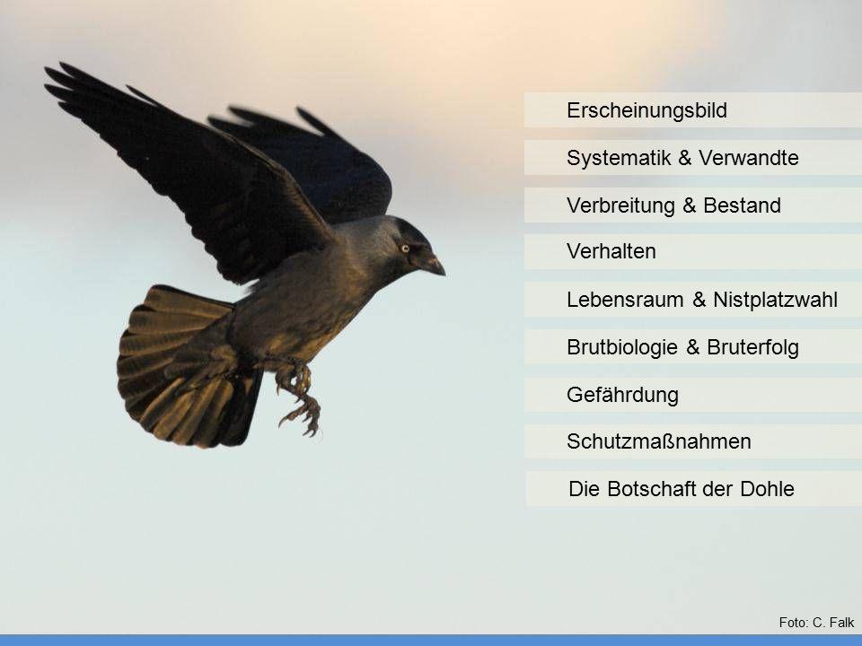 Erscheinungsbild Systematik & Verwandte Verhalten Verbreitung & Bestand Lebensraum & Nistplatzwahl Brutbiologie & Bruterfolg Gefährdung Schutzmaßnahme