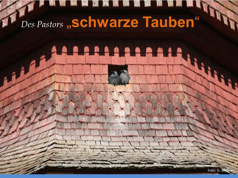 """Foto: G. Wellner Des Pastors """"schwarze Tauben"""""""