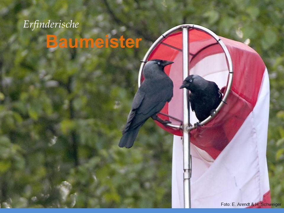 Erfinderische Baumeister Foto: E. Arendt & H. Schweiger