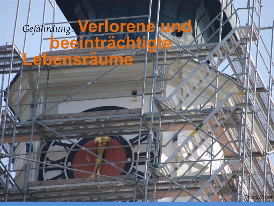Gefährdung: Verlorene und beeinträchtigte Lebensräume Foto: S. Weber