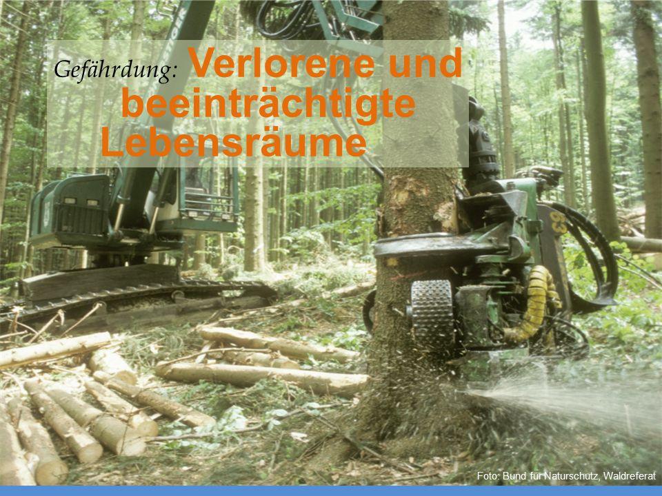 Foto: Bund für Naturschutz, Waldreferat Gefährdung: Verlorene und beeinträchtigte Lebensräume