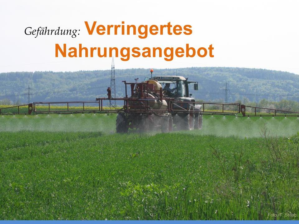 Foto: T. Staab Gefährdung: Verringertes Nahrungsangebot