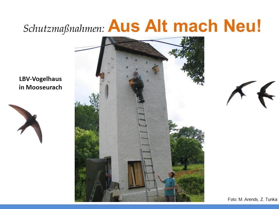 Foto: M. Arends, Z. Tunka LBV-Vogelhaus in Mooseurach Schutzmaßnahmen: Aus Alt mach Neu!