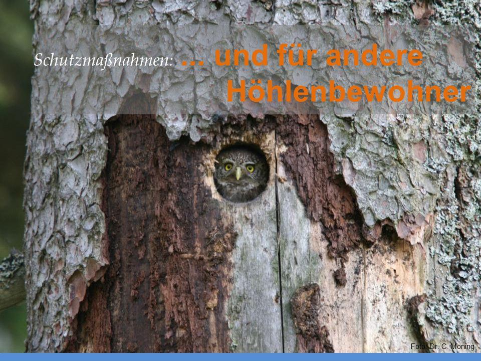 Foto: Dr. C. Moning Schutzmaßnahmen :... und für andere Höhlenbewohner