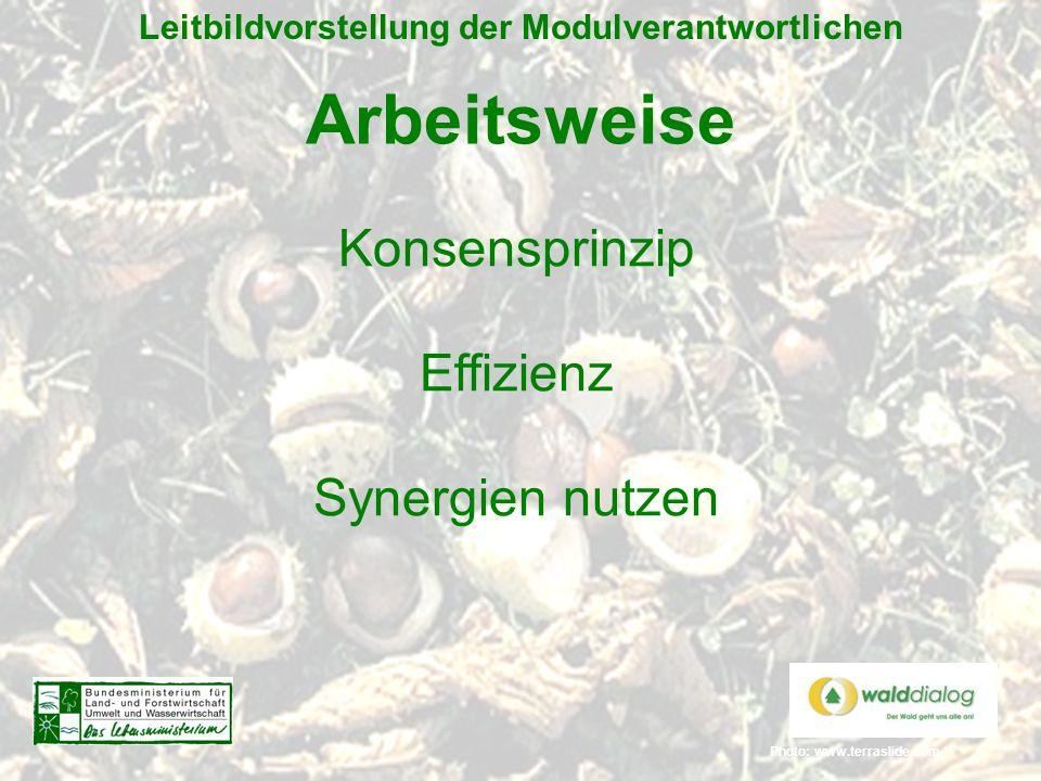 Photo: www.terraslide.com Leitbildvorstellung der Modulverantwortlichen Arbeitsweise Konsensprinzip Effizienz Synergien nutzen