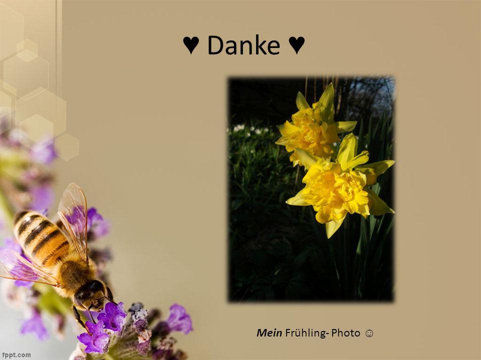 ♥ Danke ♥ Mein Frühling- Photo ☺