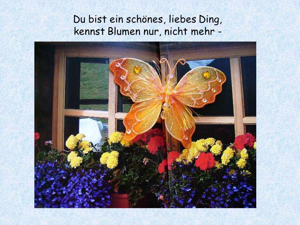 Kleiner, bunter Schmetterling, du schwirrst so leicht umher,