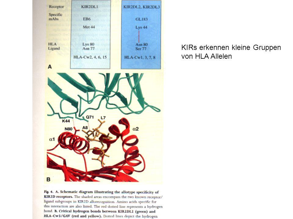 KIRs erkennen kleine Gruppen von HLA Allelen