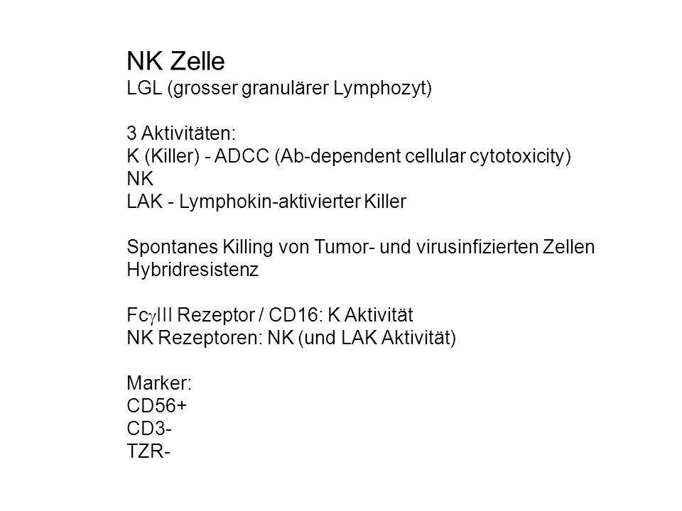 NK Zelle LGL (grosser granulärer Lymphozyt) 3 Aktivitäten: K (Killer) - ADCC (Ab-dependent cellular cytotoxicity) NK LAK - Lymphokin-aktivierter Kille