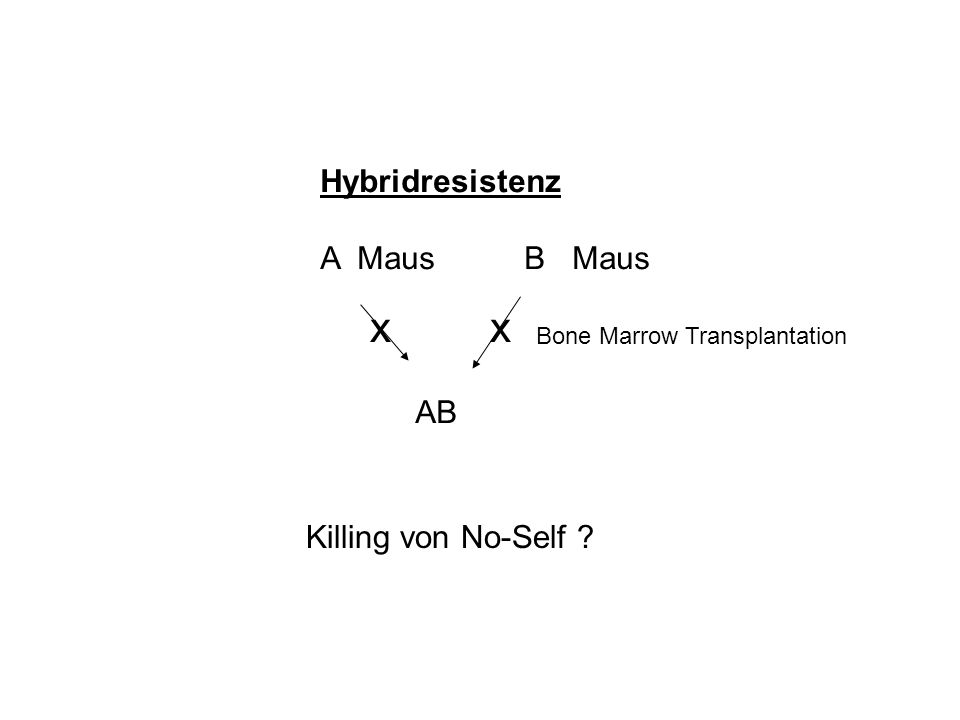 Hybridresistenz A Maus B Maus AB Bone Marrow Transplantation xx Killing von No-Self ?