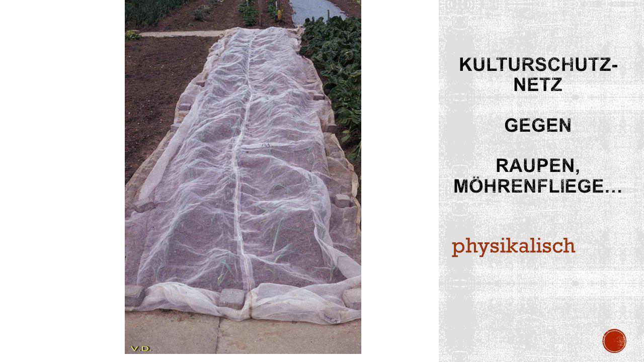 physikalisch