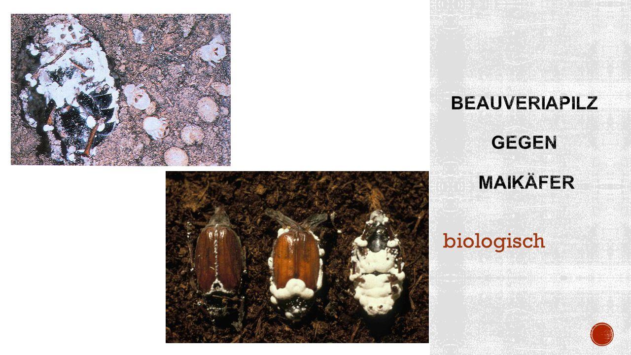 biologisch