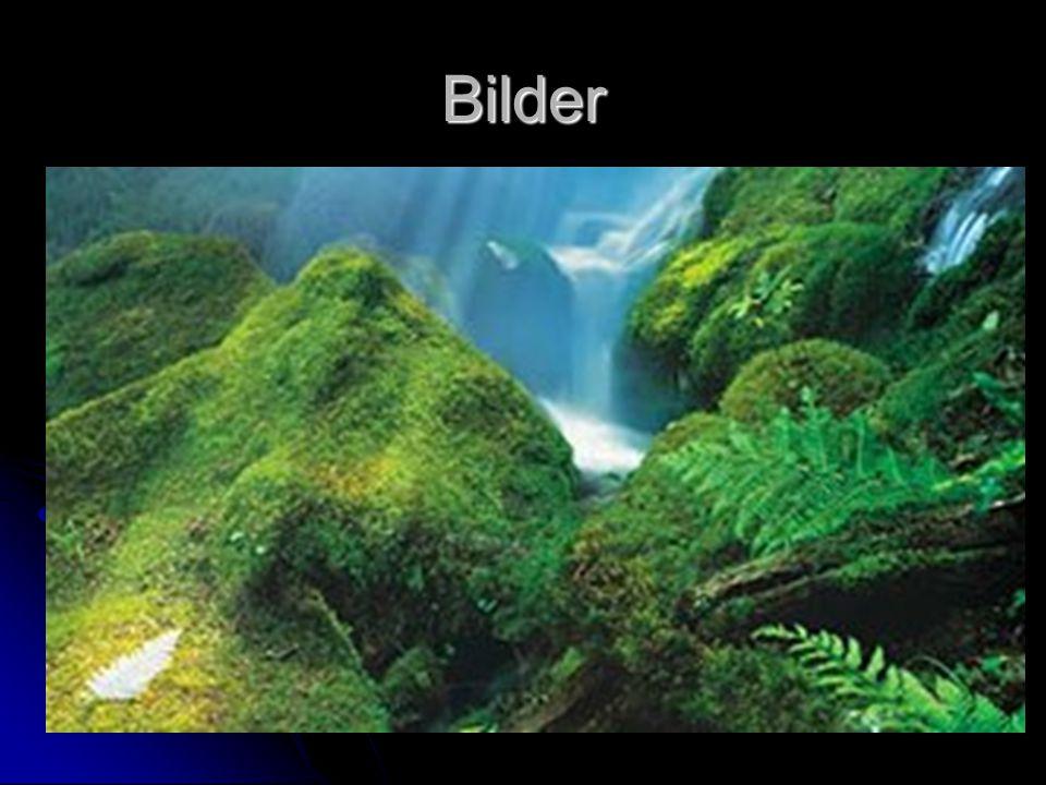 Landschaft Es gibt nichts, was Naturfreaks nicht begeistern würde: tiefblaue Buchten und sandige Strände, spektakuläre Fjorde und eisgekrönte Gipfel,