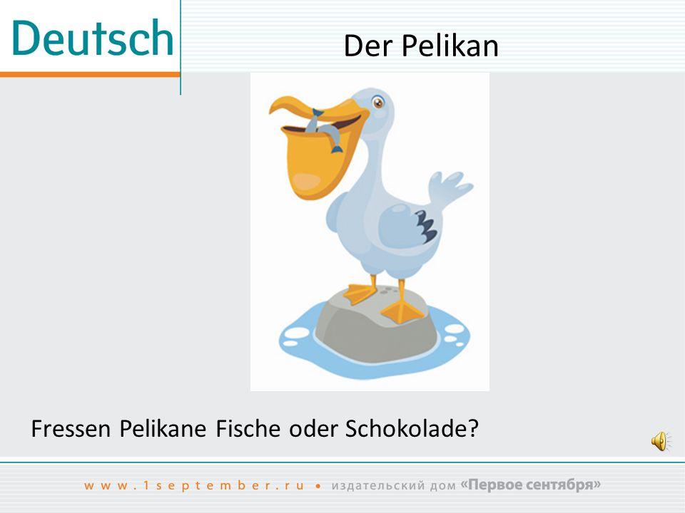 Der Pelikan Fressen Pelikane Fische oder Schokolade?