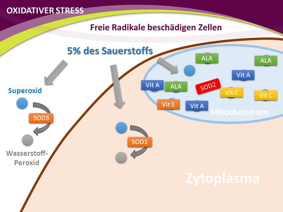 SOD2 SOD1 SOD3 Vit C Vit E Vit A ALA Vit C ALA Vit A OXIDATIVER STRESS Freie Radikale beschädigen Zellen Zytoplasma Superoxid Wasserstoff- Peroxid 5%