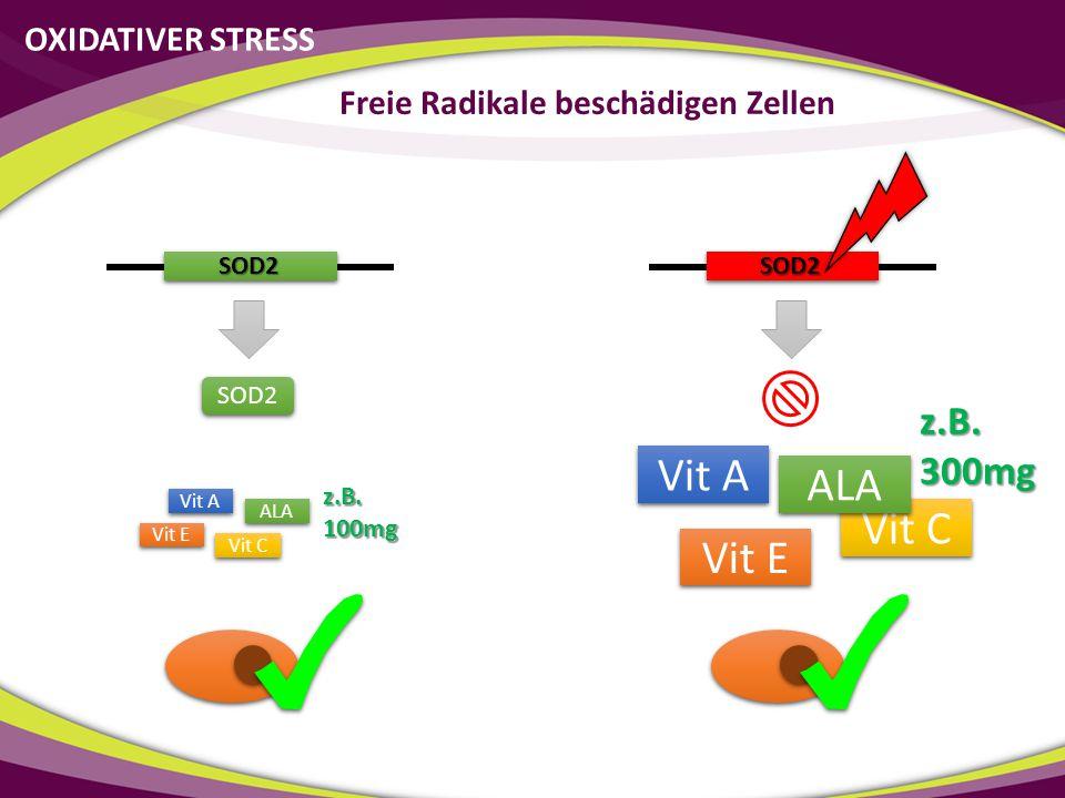 SOD2 SOD2 SOD2 Vit C Vit E ALA Vit A Vit C Vit E ALA Vit A z.B.300mg z.B.100mg OXIDATIVER STRESS Freie Radikale beschädigen Zellen