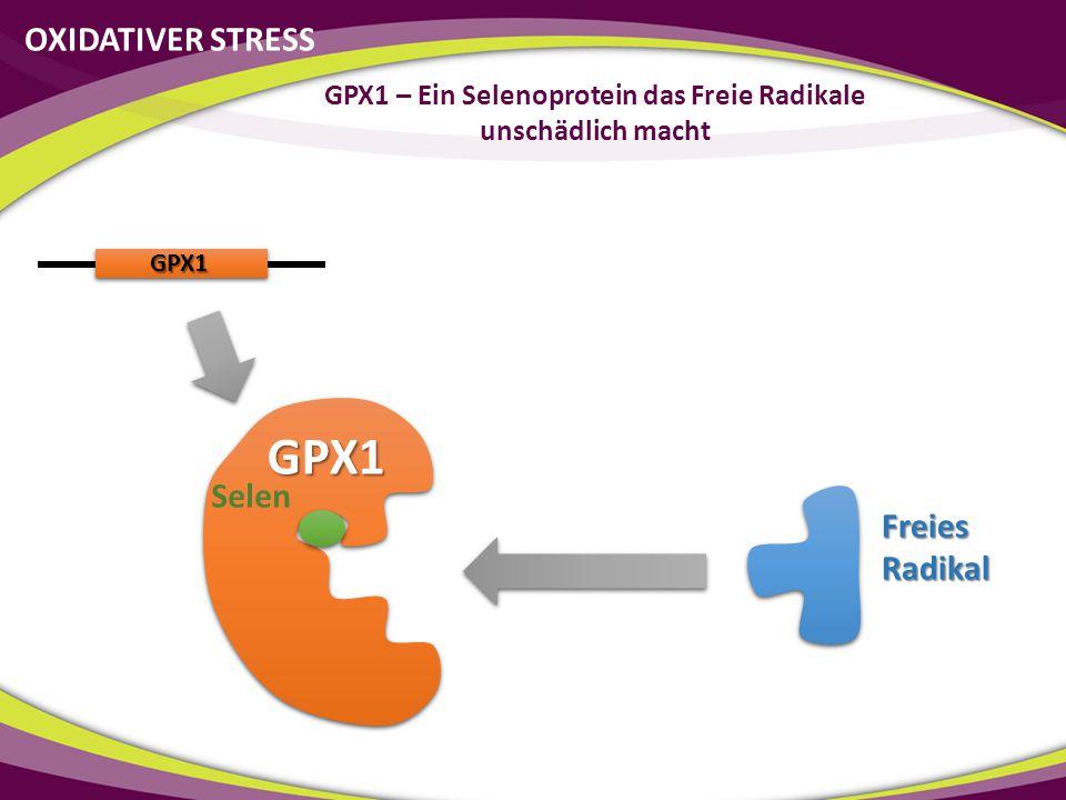 GPX1 GPX1 Selen Freies Radikal OXIDATIVER STRESS GPX1 – Ein Selenoprotein das Freie Radikale unschädlich macht