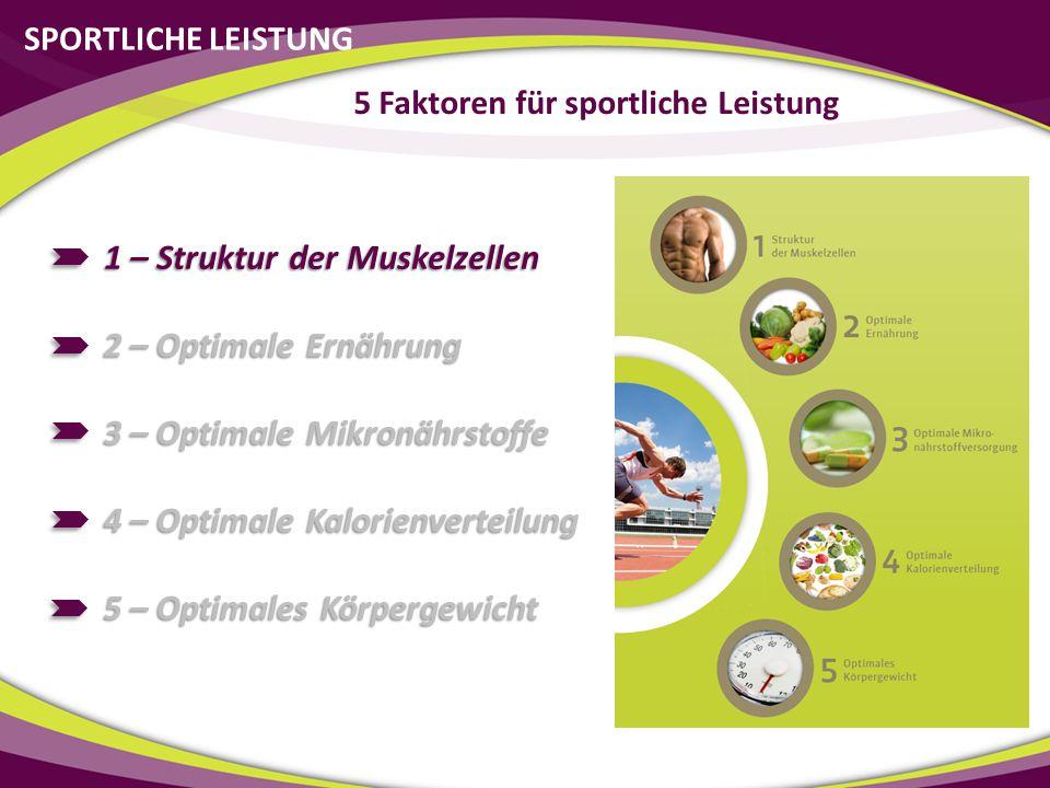 SPORTLICHE LEISTUNG 1 – Struktur der Muskelzellen 2 – Optimale Ernährung 3 – Optimale Mikronährstoffe 4 – Optimale Kalorienverteilung 5 – Optimales Kö