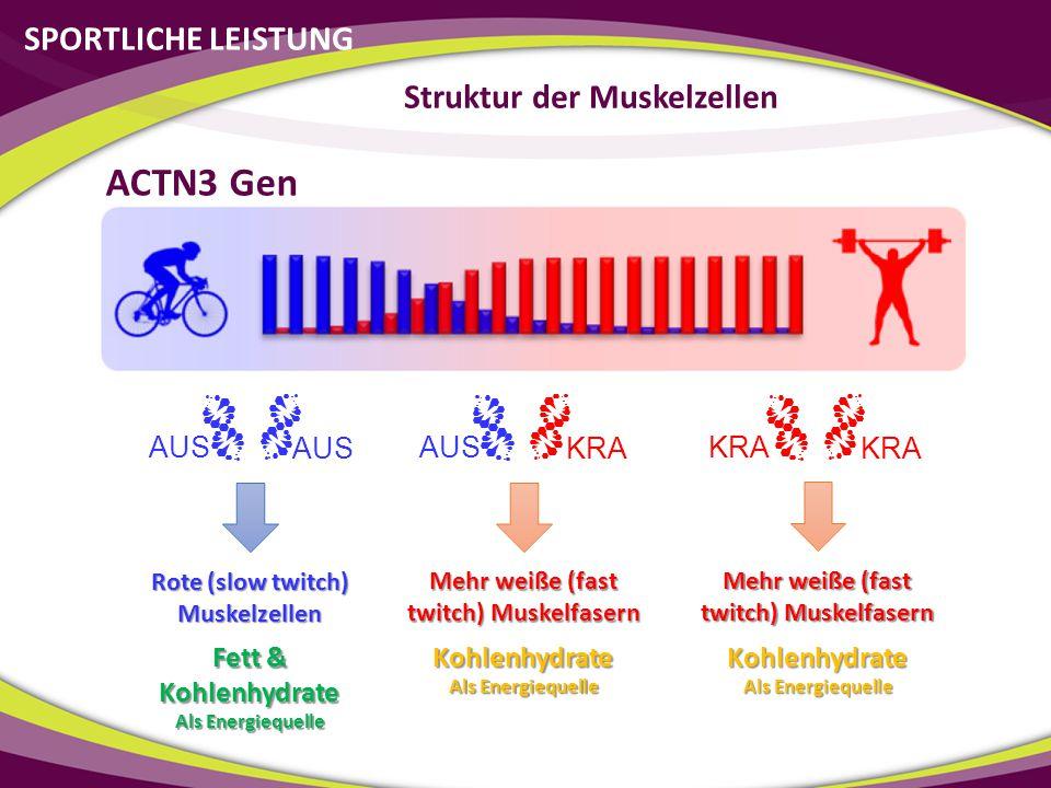 SPORTLICHE LEISTUNG Struktur der Muskelzellen AUS KRA AUS KRA ACTN3 Gen Rote (slow twitch) Muskelzellen Mehr weiße (fast twitch) Muskelfasern Fett & K