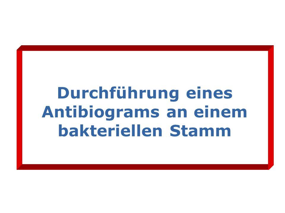 Durchführung eines Antibiograms an einem bakteriellen Stamm