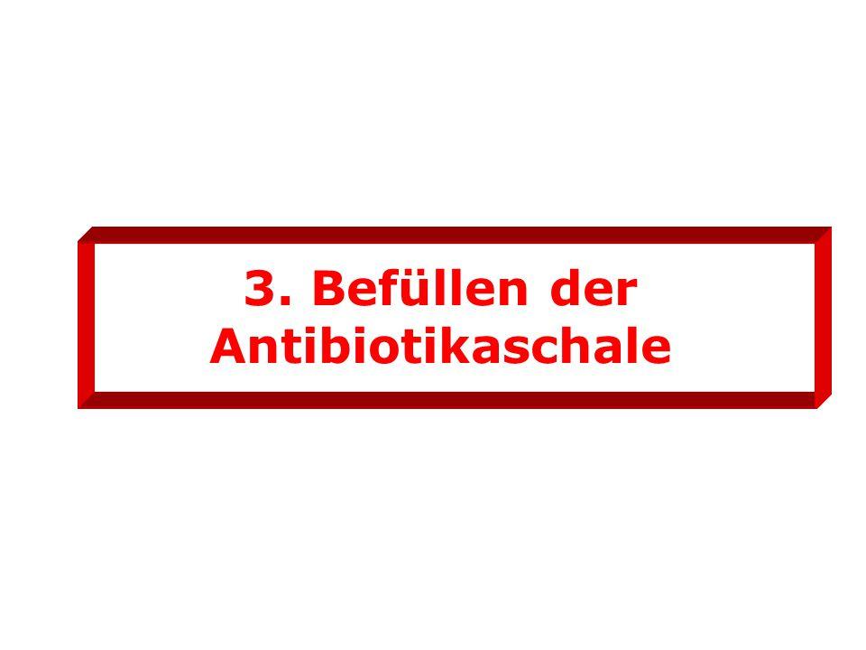 3. Befüllen der Antibiotikaschale