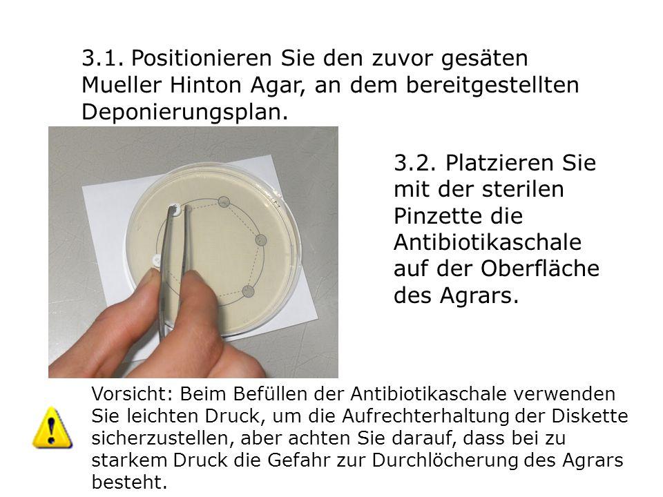 3.1. Positionieren Sie den zuvor gesäten Mueller Hinton Agar, an dem bereitgestellten Deponierungsplan. 3.2. Platzieren Sie mit der sterilen Pinzette