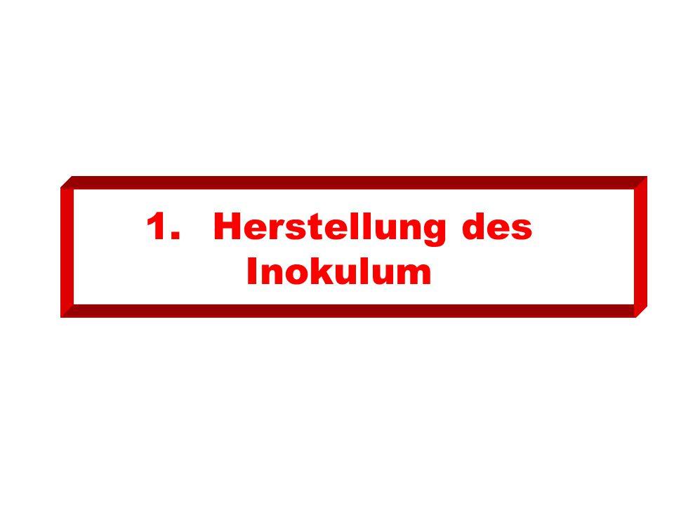 1.Herstellung des Inokulum