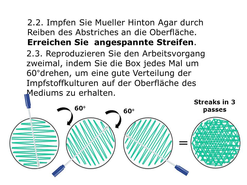 2.2. Impfen Sie Mueller Hinton Agar durch Reiben des Abstriches an die Oberfläche.