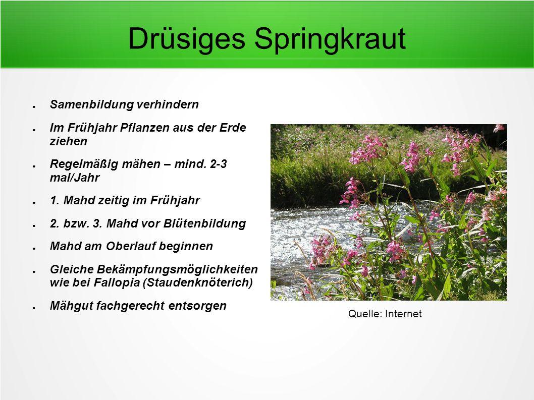 Drüsiges Springkraut ● Samenbildung verhindern ● Im Frühjahr Pflanzen aus der Erde ziehen ● Regelmäßig mähen – mind. 2-3 mal/Jahr ● 1. Mahd zeitig im