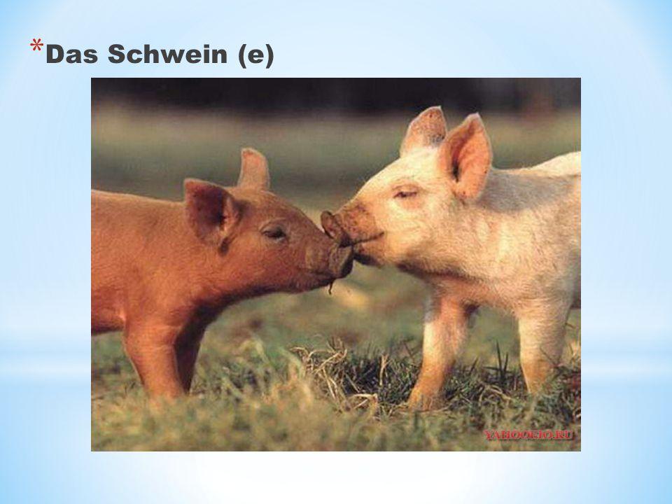 * Das Schwein (e)