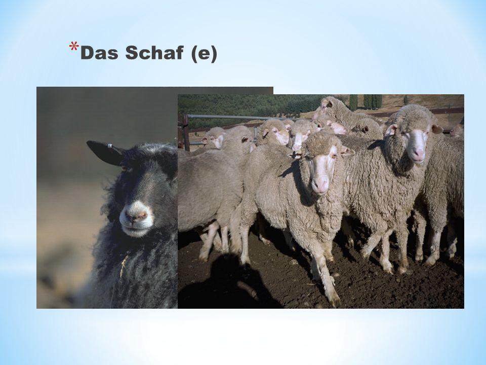 * Das Schaf (e)