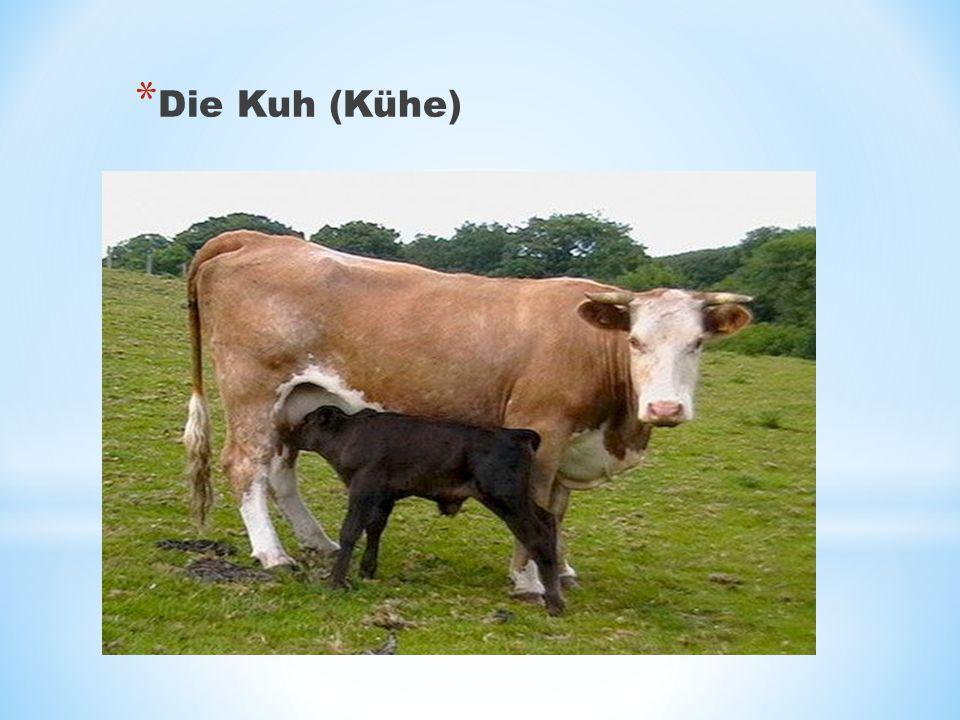 * Die Kuh (Kühe)