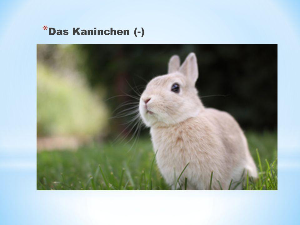 * Das Kaninchen (-)