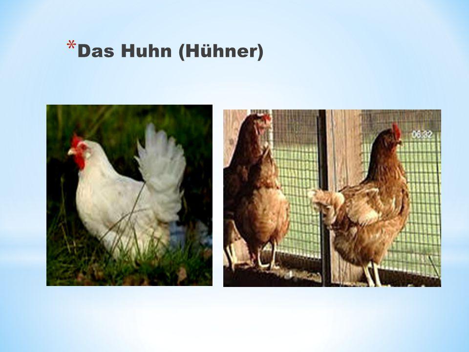 * Das Huhn (Hühner)
