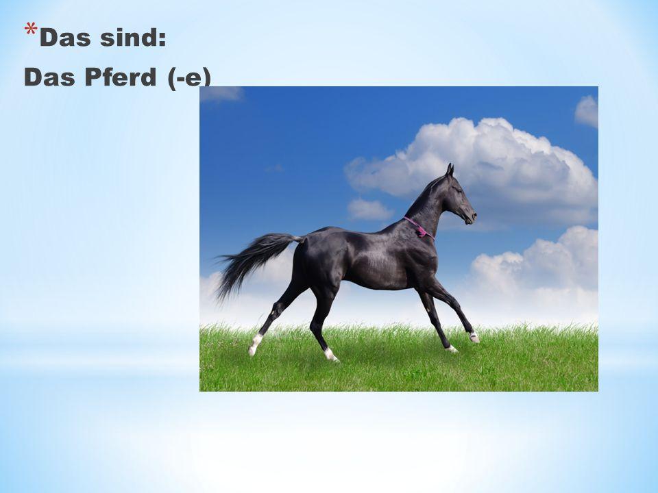 * Das sind: Das Pferd (-e)