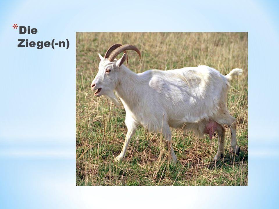 * Die Ziege(-n)