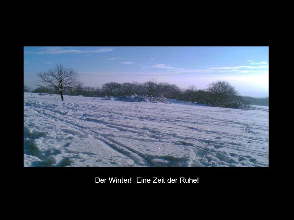 Der Winter! Eine Zeit der Ruhe!